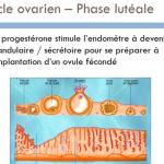 formation-cycle-menstruel