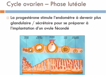 formation-cycle-menstruel