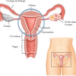 formation-maladies-organes-gyne